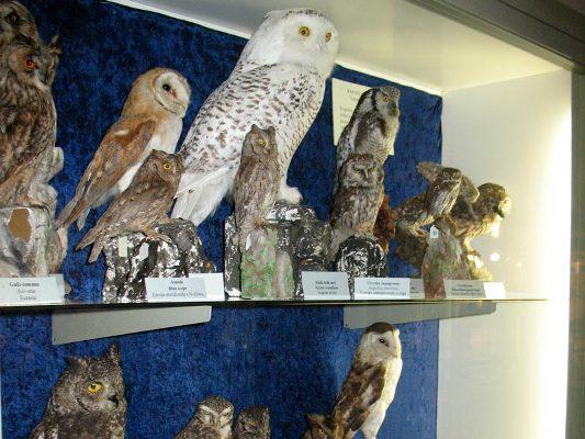 massage annoncer Natural History Museum kbh